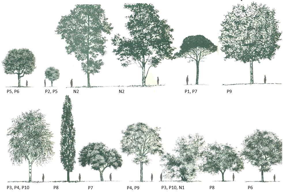 Parques y jardines el legado de la expo 39 92 for Arboles de hoja caduca